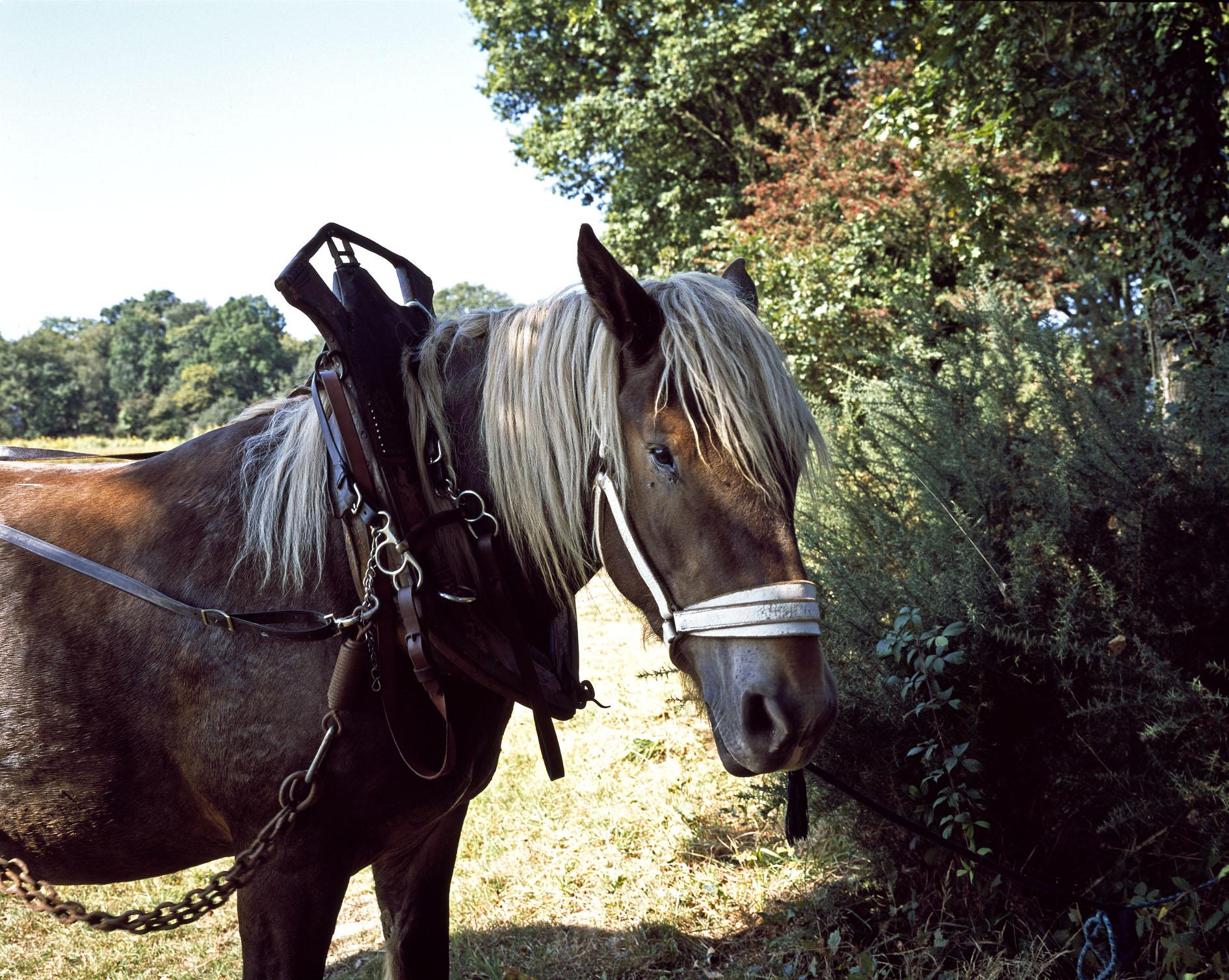 Un cheval